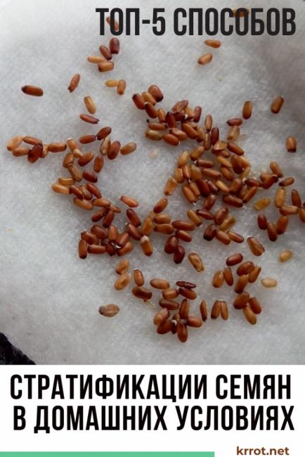 Стратификация семян в домашних условиях – все, что вы хотели знать
