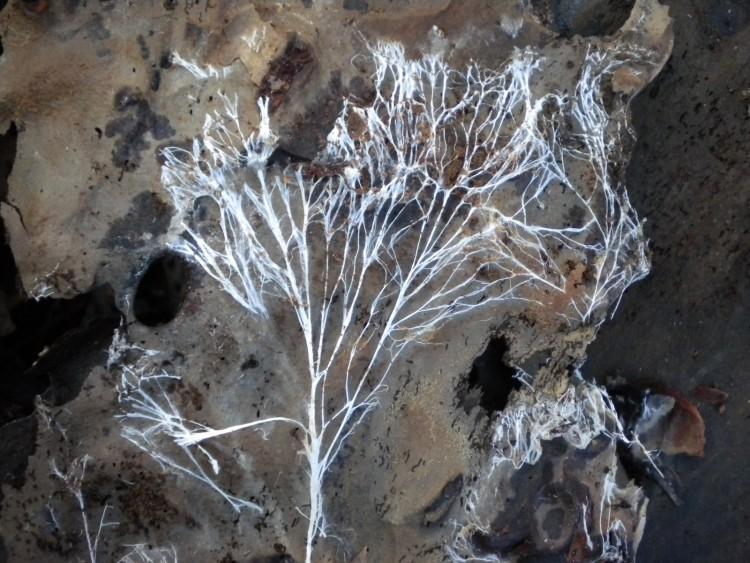 Нити мицелия в мазке - что это такое, лечение и что делать если обнаружены споры дрожжеподобного гриба