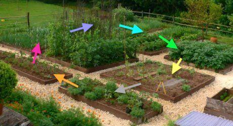 Севооборот на огороде: что после чего можно сажать на огороде, таблица