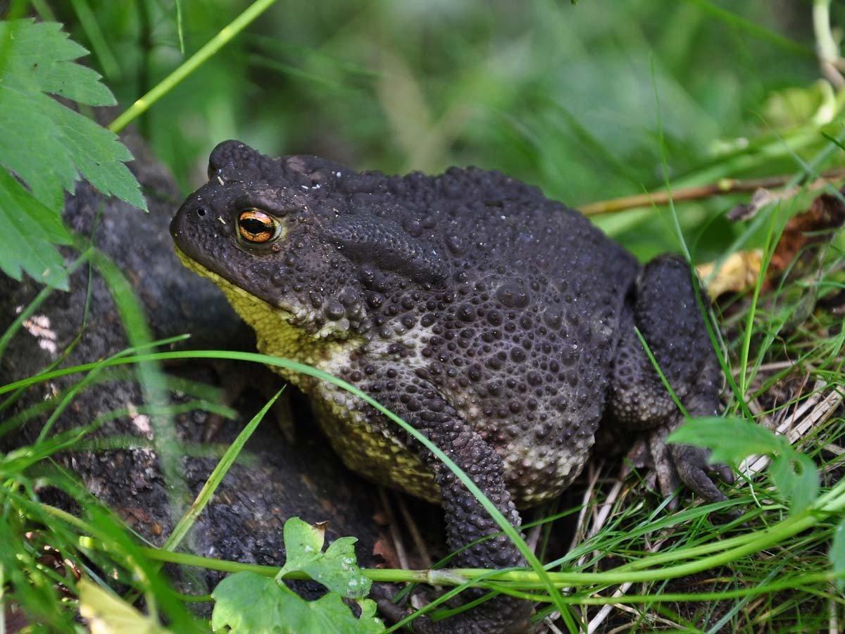 Интересное о жабах