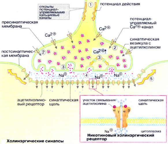 Молекула здравого ума