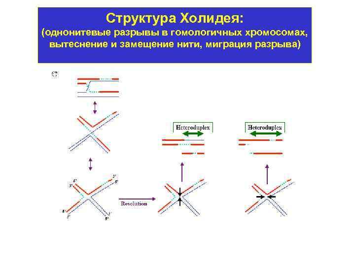Гомологичные рекомбинационные функции, механизм и применения / биология   thpanorama - сделайте себя лучше уже сегодня!