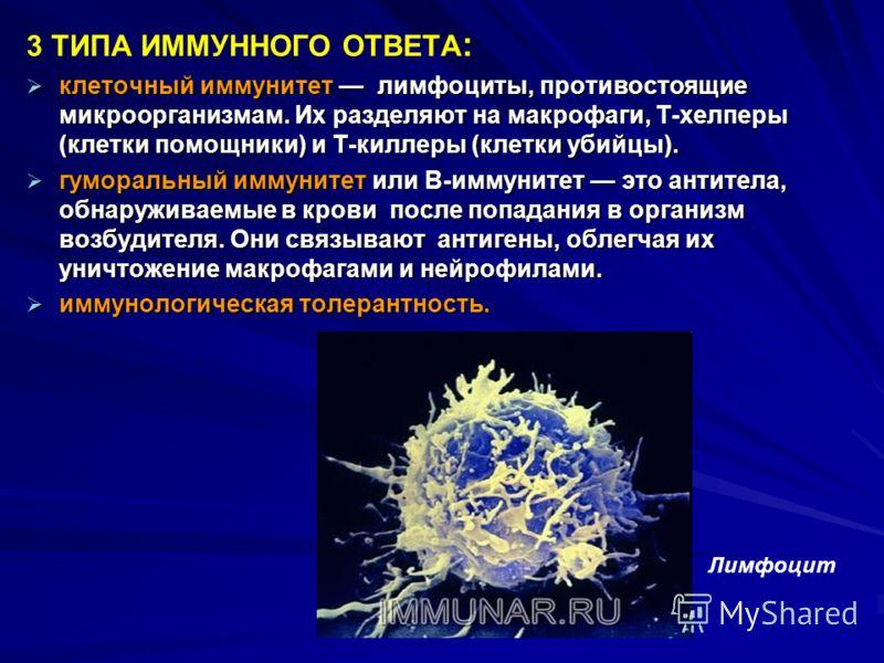 Клетки-макрофаги. что это такое и какими они обладают функциями