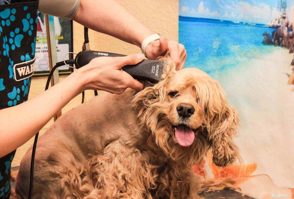 Груминг собак: что это такое и кто такой грумер