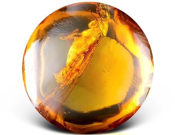 Камень янтарь свойства, значение, происхождение и цена. магические свойства янтаря