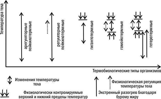 § 6. температура как экологический фактор. пойкилотермные и гомойотермные организмы: *пойкилотермные и гомойотермные организмы