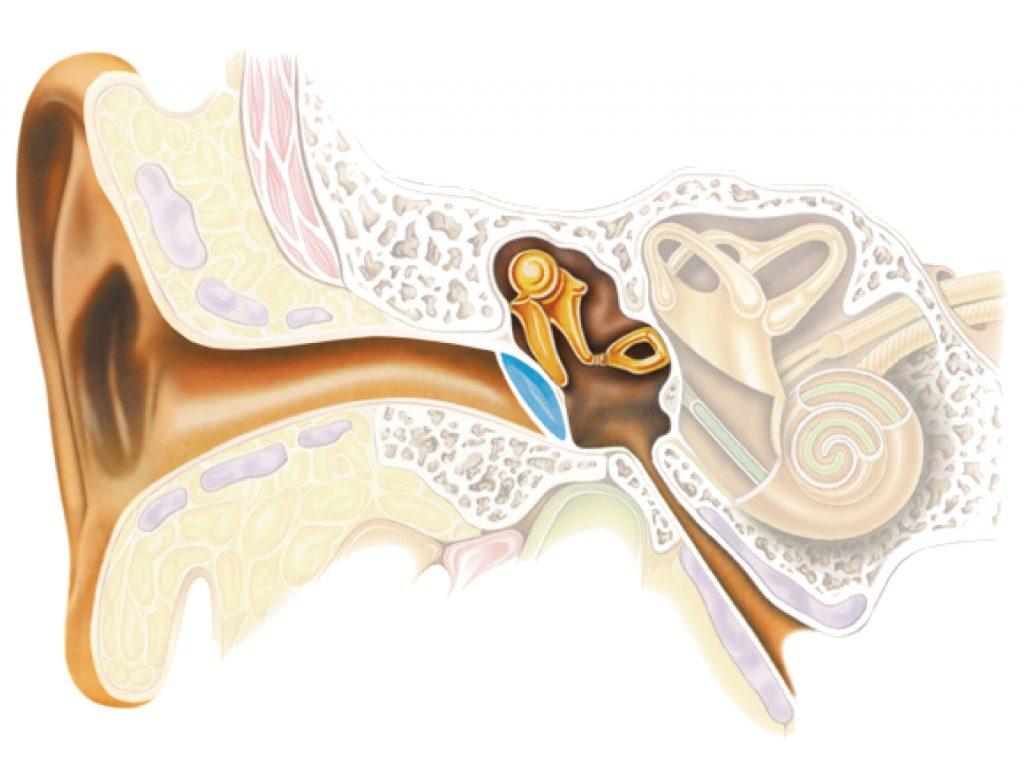 Тугоухость: лечение, причины, симптомы. как лечить тугоухость?