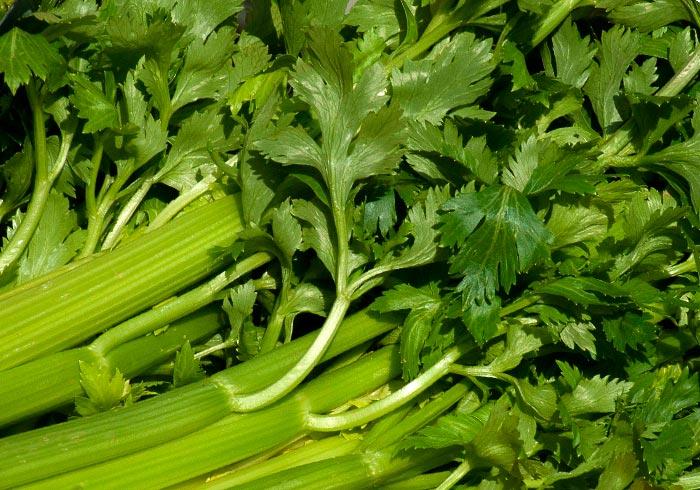 Польза сельдерея листового и корневого, применение в кулинарии и косметологии