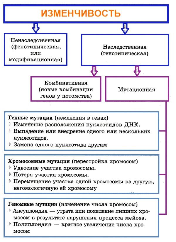 Мутации, их свойства. классификация мутаций
