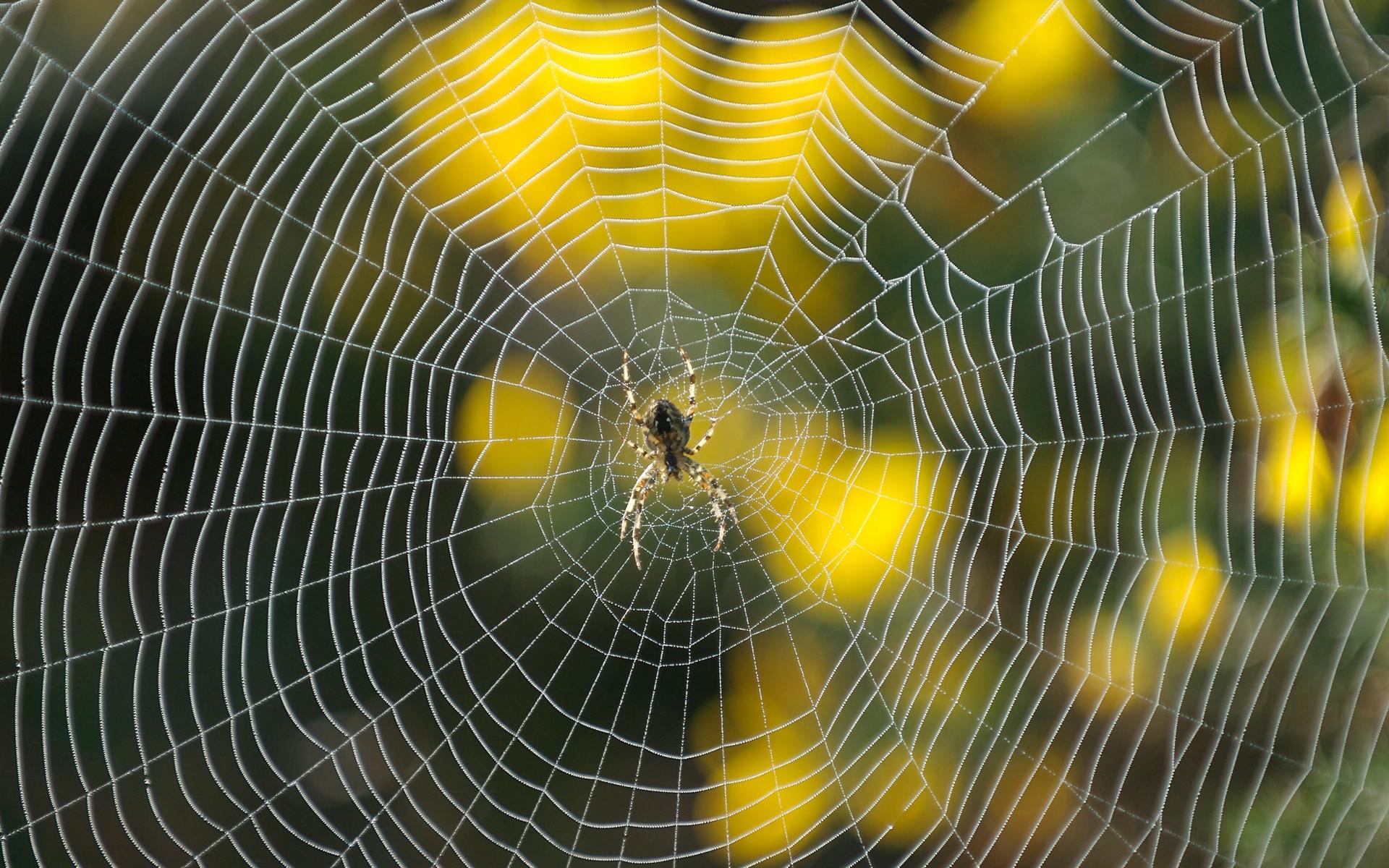 Что такое космическая паутина?