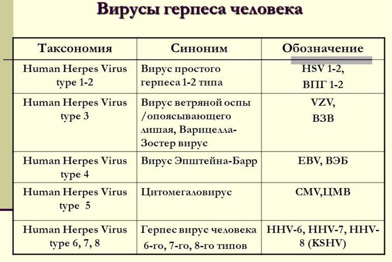 Герпес 6 типа что это: особенности и лечение