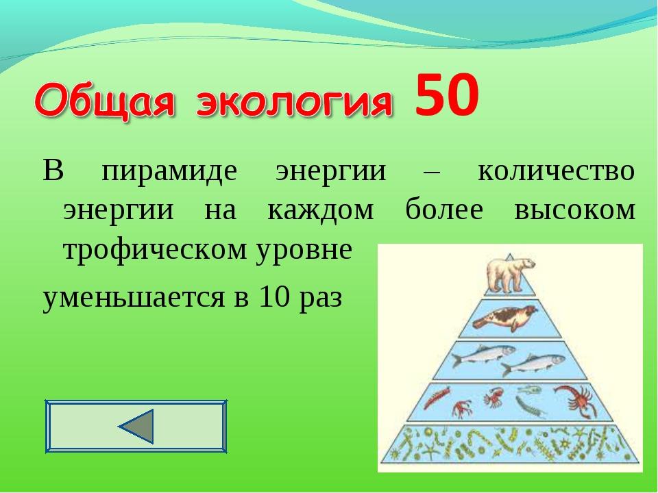 Экологическая пирамида - это.. правило экологической пирамиды. примеры
