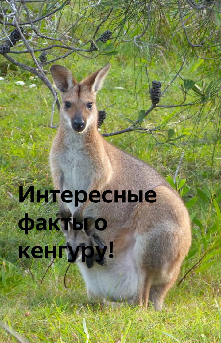 Кенгуру: виды, фото, описание, образ жизни своеобразного животного