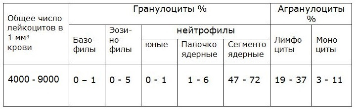 Лейкоцитарная формула (лейкоцитограмма, differential white blood cell count)