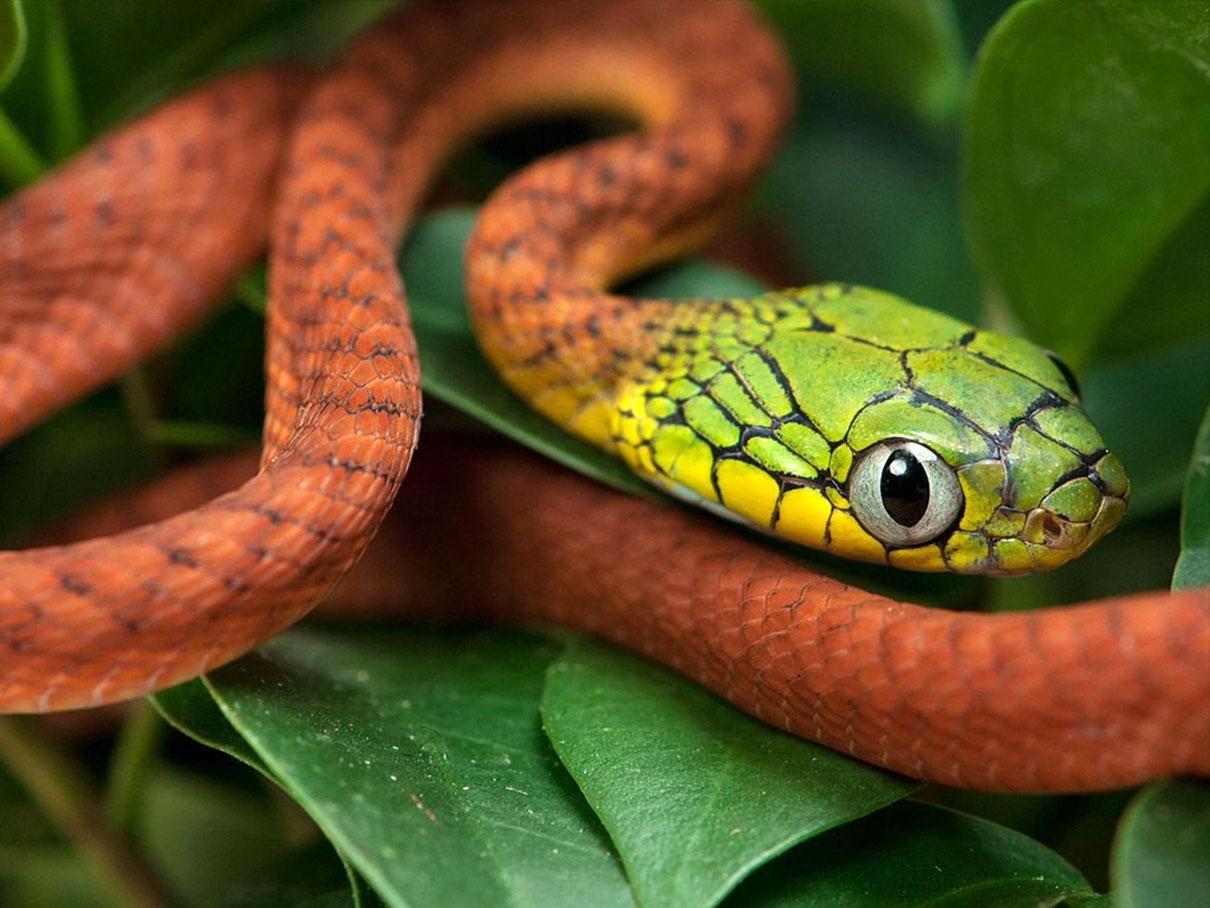 Змеи: особенности и виды змей