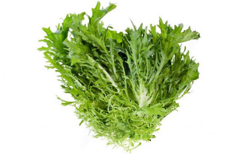 Цикорий салатный (эндивий): фото, польза и вред, выращивание из семян, когда сажать