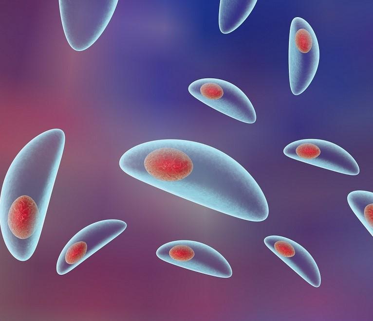 Что такое токсоплазмоз?