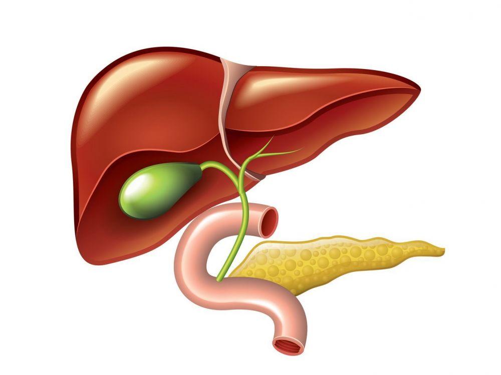 Зондирование желудка — википедия. что такое зондирование желудка