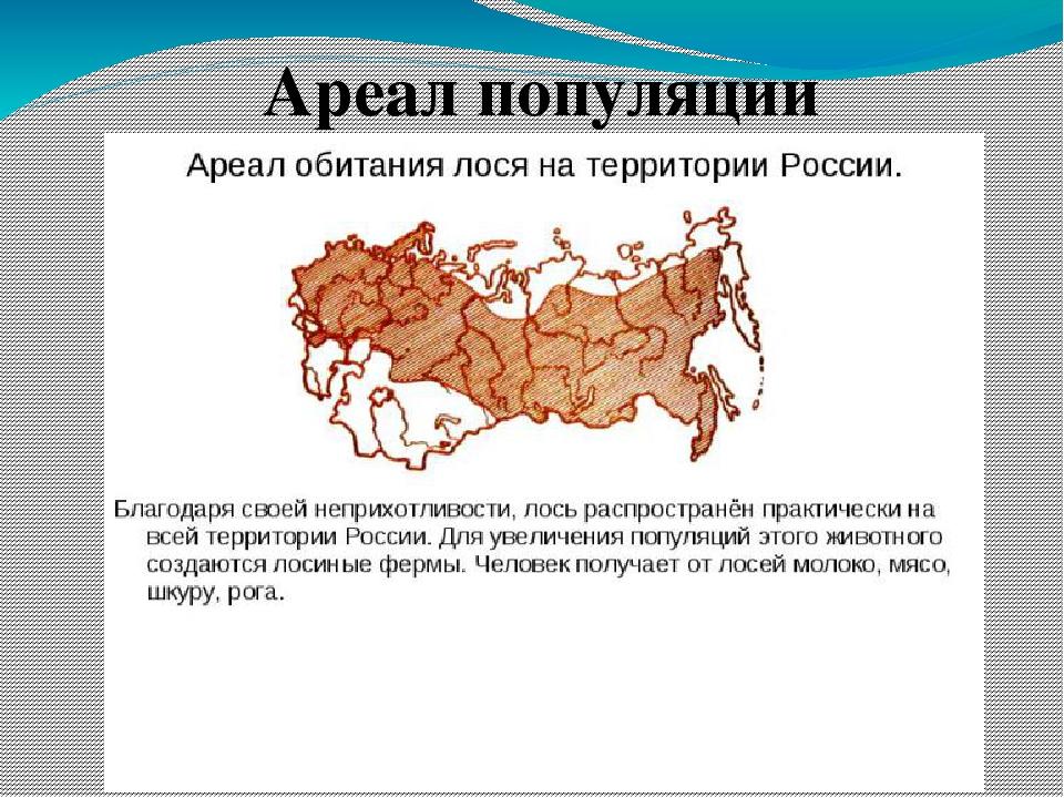 Что такое ареал вида в биологии - определение. место обитания вида :: syl.ru