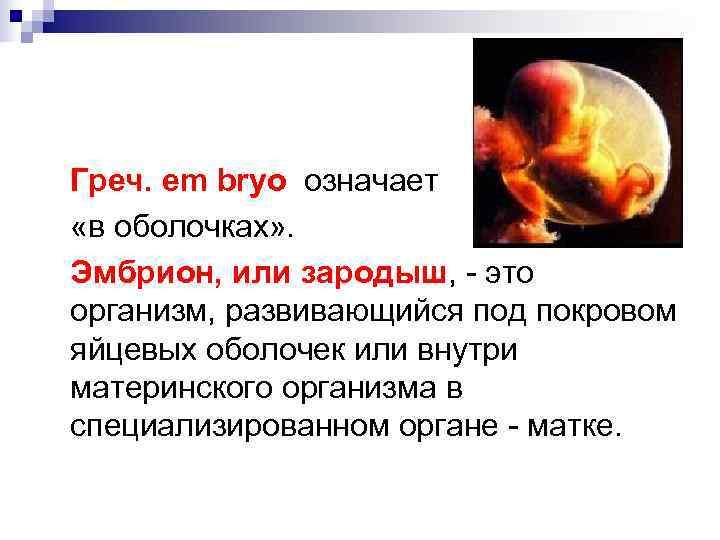 Зародыш что это? значение слова зародыш