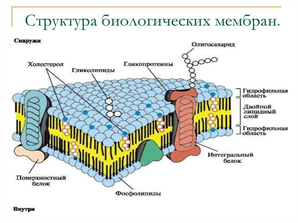 Что такое мембрана и как не ошибиться в выборе