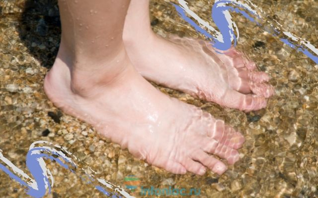 Стопа человека: строение и обозначение костей и связок ноги, заболевания