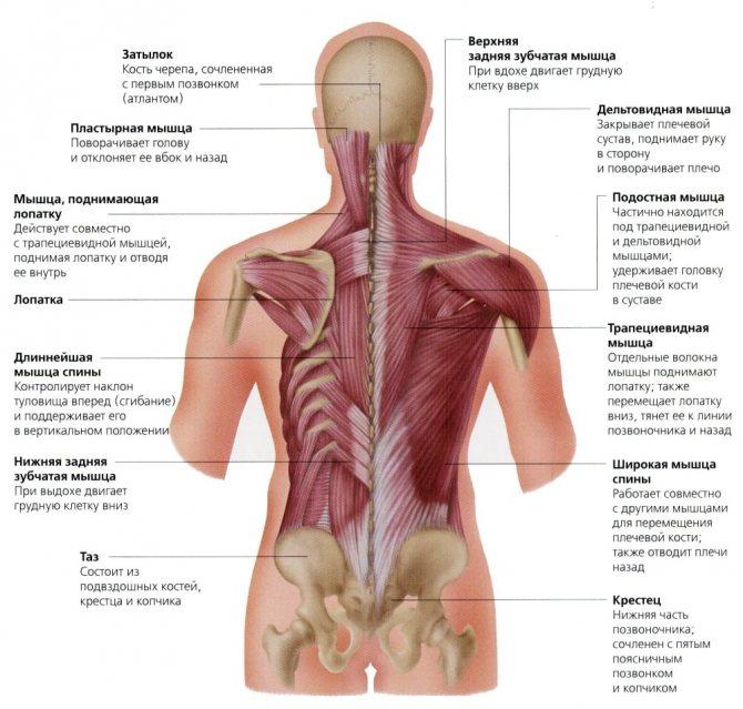 Мышечно тонические синдромы