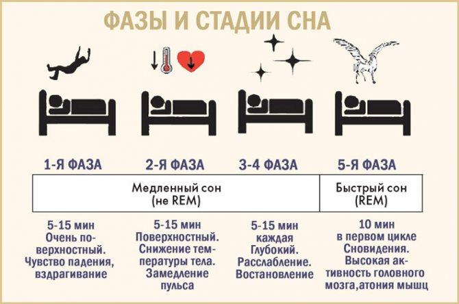 Что такое быстрый и медленный сон, соотношение фаз