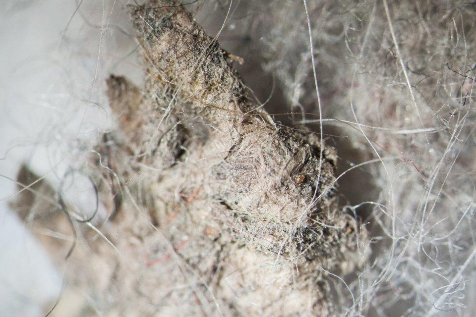 Все о пыли: откуда появляется в квартире, из чего состоит, как образуется