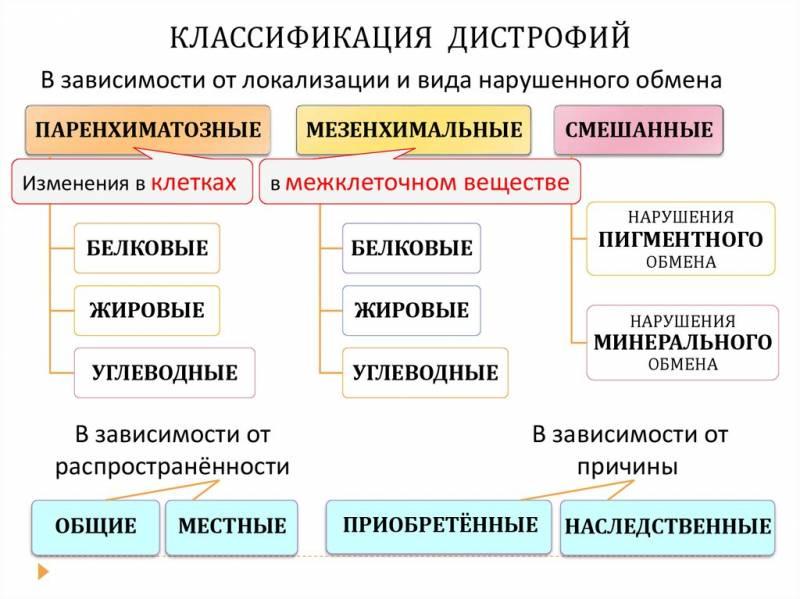 Классификация — что это такое | ktonanovenkogo.ru