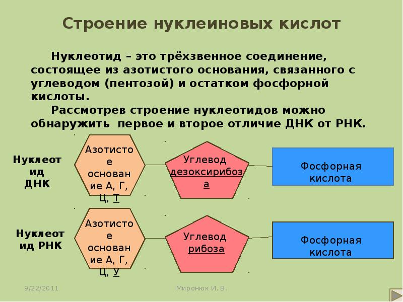 Нуклеиновые кислоты: история исследования, описание