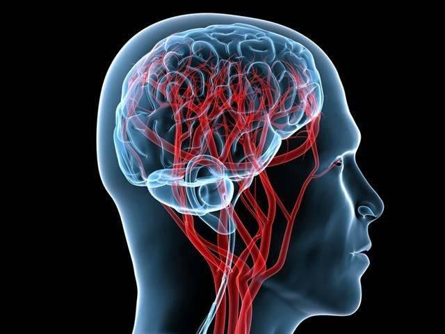Уздг маг – что это такое, показания, описание процедуры. ультразвуковая допплерография магистральных артерий головы :: syl.ru