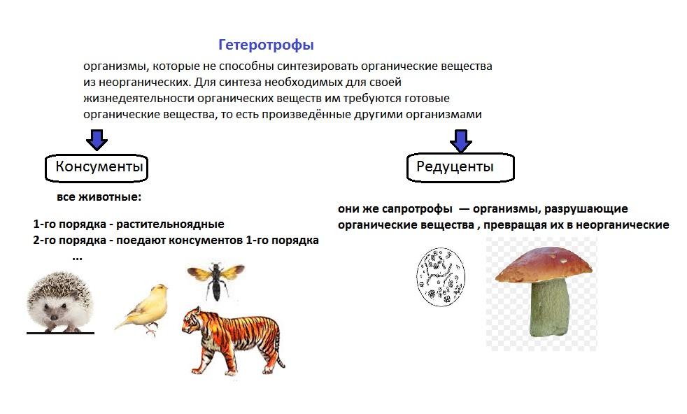 Экосистемы: понятие, развитие, размеры. природно-географические зоны. взаимодействия и взаимоотношения между организмами в экосистеме и между экосистемами. - alexmed.info