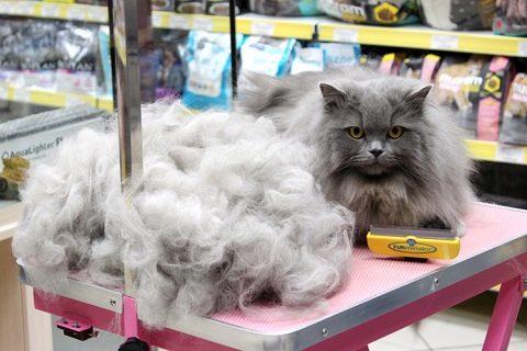 Фурминатор для кошек: плюсы и минусы, как выбрать, в чем преимущества перед расческой, как правильно пользоваться, отзывы, видео