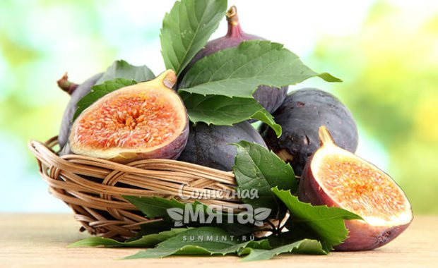 Инжир — винный плод