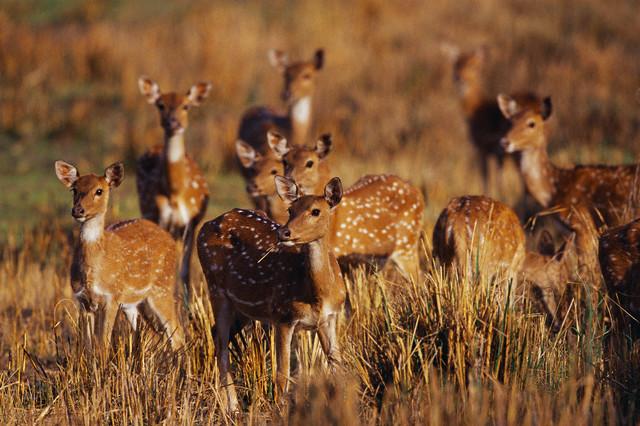 Что такое популяция в биологии, определение