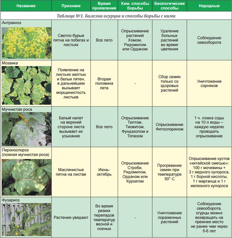 Вегетация растений: что это такое?