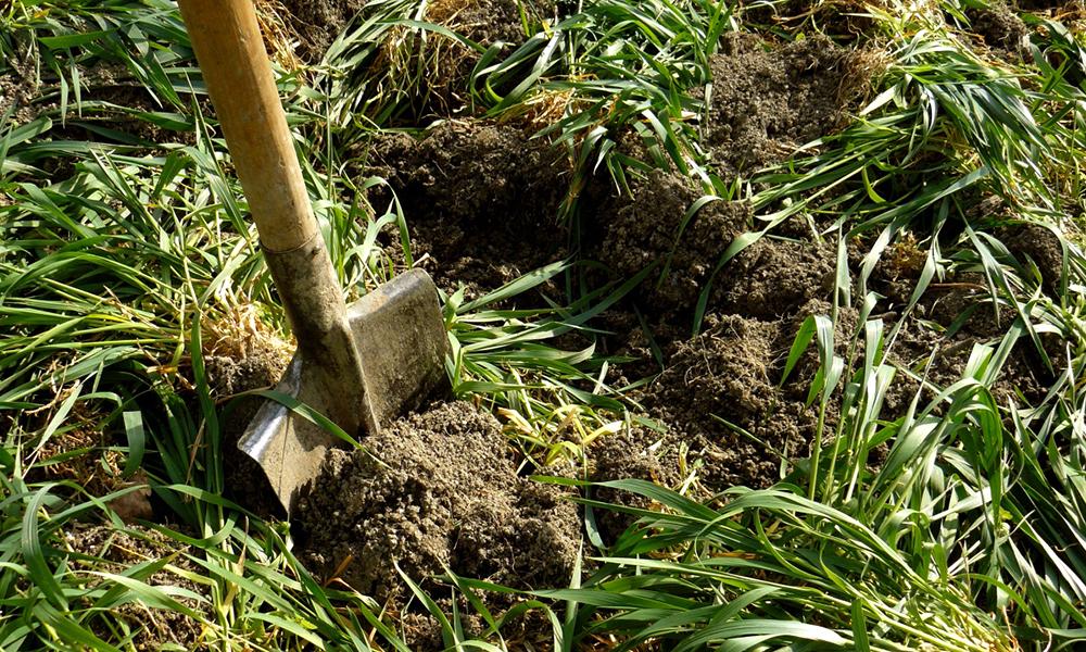 Сидераты – что это, для чего они нужны? правила выращивания сидератов