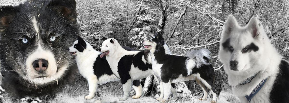 Породы собак — википедия. что такое породы собак