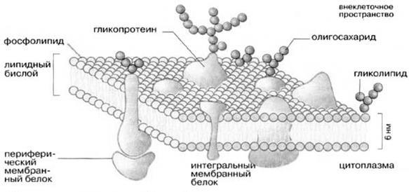 Что это такое – мембранная ткань?