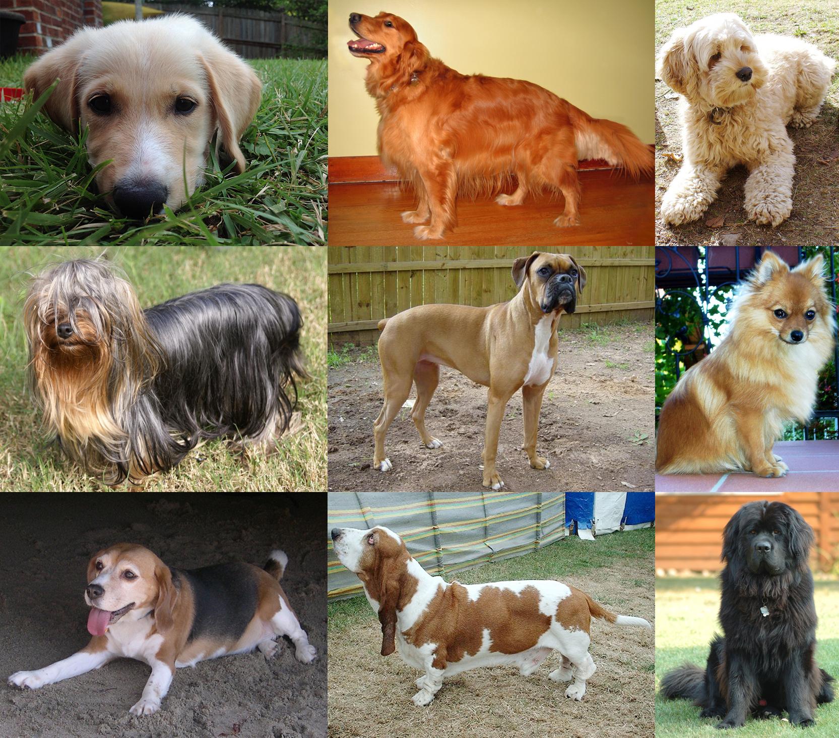 Собака: все, что вы хотели знать о «друге человека»