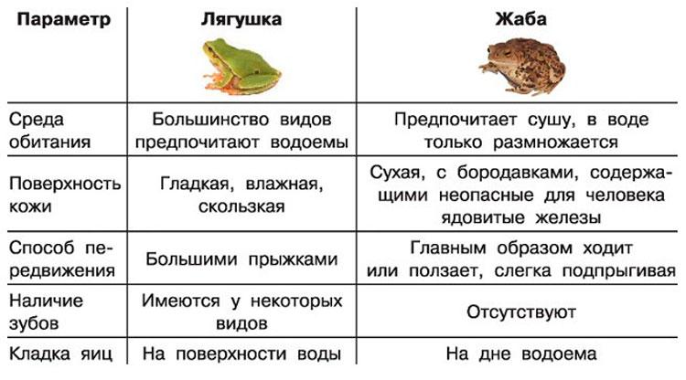 Лягушка - это земноводное или пресмыкающееся?
