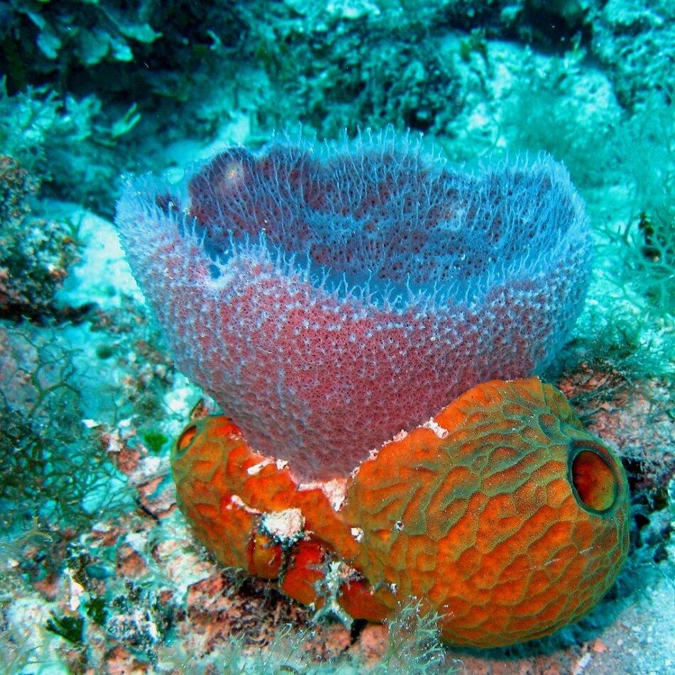 Что делают из кораллов и какими свойствами они обладают?