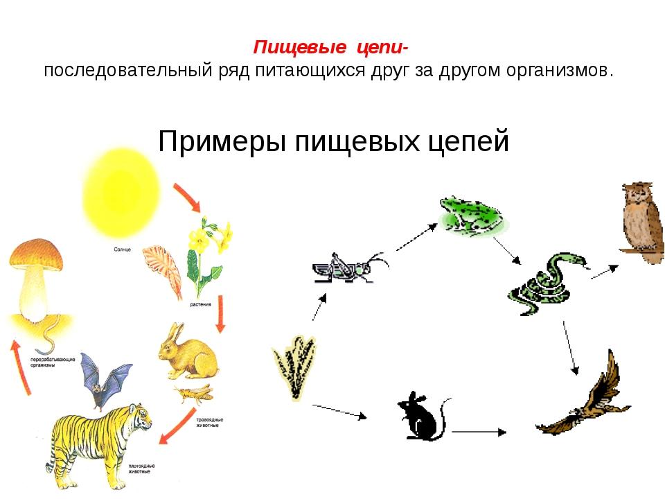 Пищевая цепочка в природе: детритная, пастбищная и паразитическая цепи питания окружающего мира   tvercult.ru
