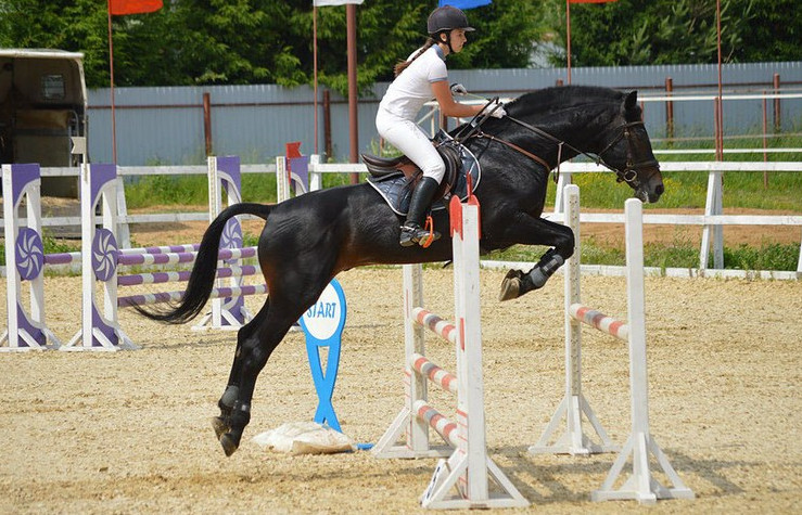 Конкур — вид конного спорта