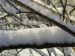Все про снег: откуда берется, виды, свойства, факты