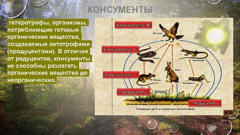 Редуценты — википедия с видео // wiki 2