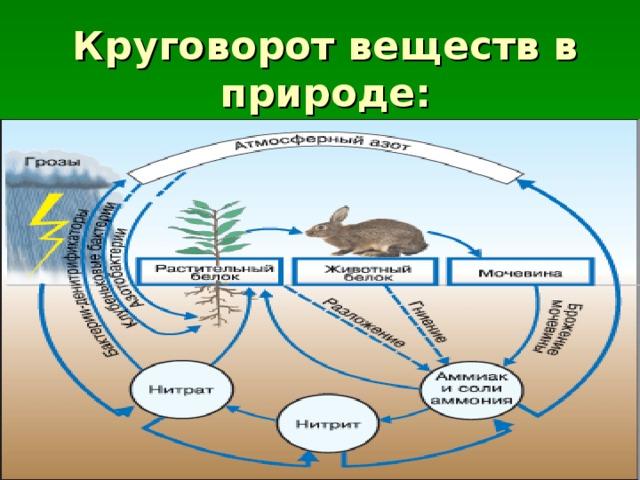 Биологический круговорот и превращение энергии в биосфере, роль в нем организмов разных царств. эволюция биосферы
