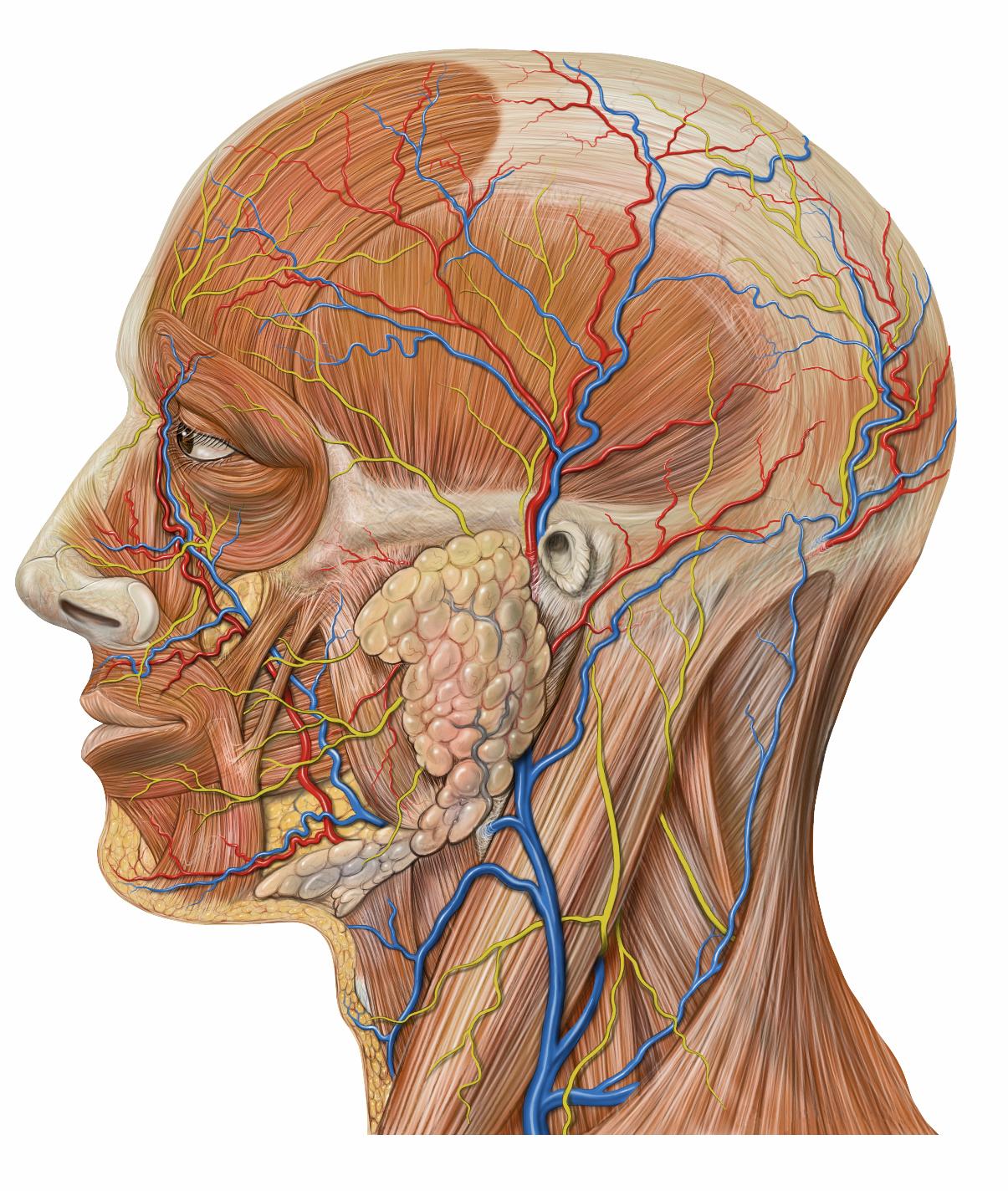 Что изучает наука физиология? физиология человека и микроорганизмов