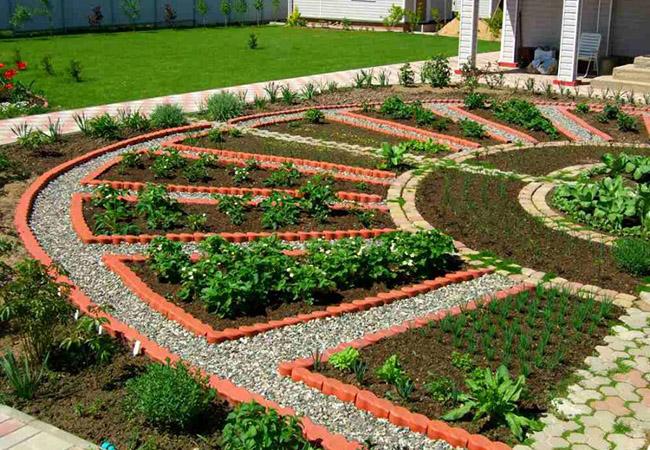 Что такое сидераты и для чего они нужны на огороде
